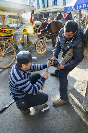 farrier: Istanbul, Turkey - December 18, 2013: Farrier. Horses hoof nailing on shoes. Nail care of the horses phaeton car on Buyukada and master farrier who shoe. A farrier is a specialist in equine hoof care, including the trimming and balancing of horses hoove