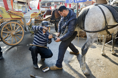 nailing: Istanbul, Turkey - December 18, 2013: Farrier. Horses hoof nailing on shoes. Nail care of the horses phaeton car on Buyukada and master farrier who shoe. A farrier is a specialist in equine hoof care, including the trimming and balancing of horses hoove