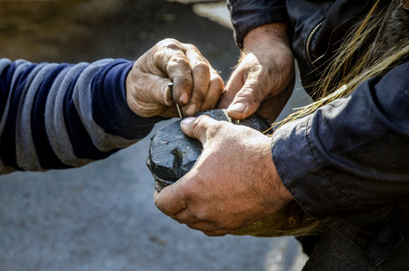 hoof: Farrier. Horses hoof nailing on shoes. A farrier is a specialist in equine hoof care, including the trimming and balancing of horses hooves and the placing of shoes on their hooves, if necessary. Stock Photo