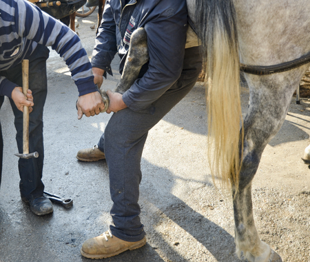 smithery: Farrier. Horses hoof nailing on shoes Stock Photo
