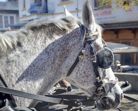horse and carriage: Horse Head and Horse Goggles , Horse Carriage