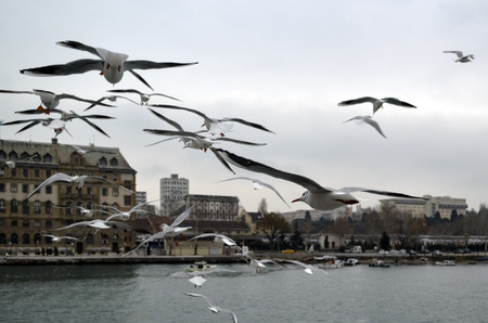 kadikoy: Turkey - Istanbul throat historic Haydarpasa train station and Near the pier with lots of seagulls flying. Editorial