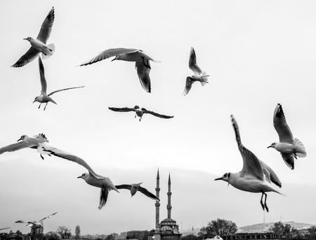 dancing seagulls on the pier. Seagulls are fed with food provided by people around the harbor. Stock Photo