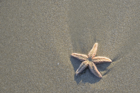 Coast beach sand surface, background. Starfish on the natural environment