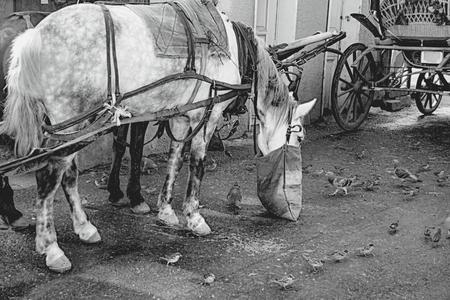 Phaeton, Pferdekutschen. Das Symbol des Pferdetransport ist das Transportfahrzeug Phaetons. Standard-Bild - 68333416