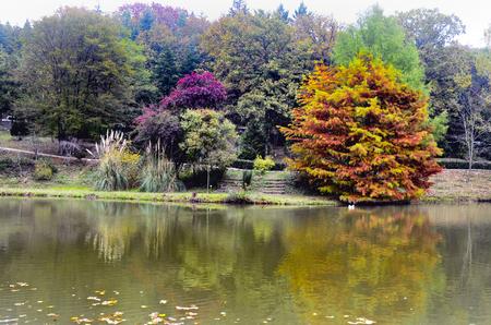 Herbstbäume um See. Herbstbäume reflektiert im See. Herbstliche Szene mit gelben, orange und roten Blättern auf Bäumen. Standard-Bild - 68801206