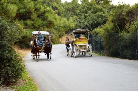 Istanbul, Turkey - October 30, 2016: In the fall Buyukada Phaeton. Horse Carriage.  The symbol of the Islands is the transportation vehicle phaetons. Adalar in Marmara Sea near Istanbul in Buyukada (meaning Big Island in Turkish). This is a neighborhood i