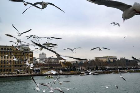 Türkei - Istanbul Kehle historischen Bahnhof Haydarpasa und in der Nähe der Pier mit vielen Möwen fliegen. Standard-Bild - 70335824