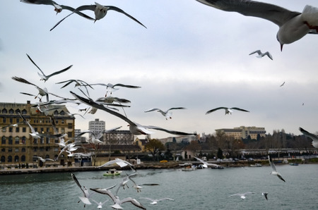 Turkey - Istanbul throat historic Haydarpasa train station and Near the pier with lots of seagulls flying. Stok Fotoğraf