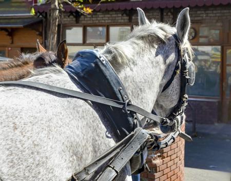 Schauen Sie sich die Pferdebrille, Pferdewagen Standard-Bild - 70164600
