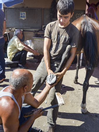 farrier: Istanbul, Turkey - September 29, 2013: Istanbul Buyukada working farrier. Farrier Horse foot nailing. In simple terms, this farrier can be defined as a professional who takes care of horses, specifically horseshoes. Istanbul Buyukada, (Big Island) have hu