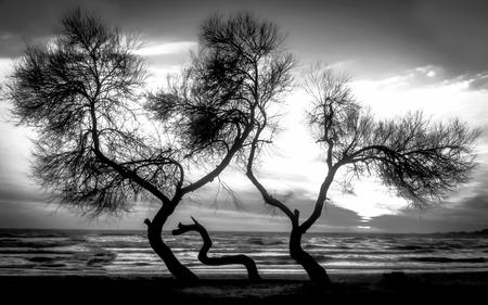 Sonnenuntergang über dem Meer am Strand Schwarz und weiß visuell Standard-Bild - 71015259