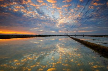 paddy field: Reflection at Paddy Field Stock Photo