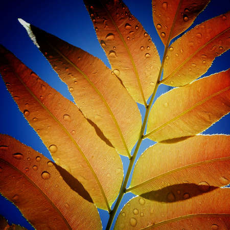 up: Close up of leaf texture with blue background