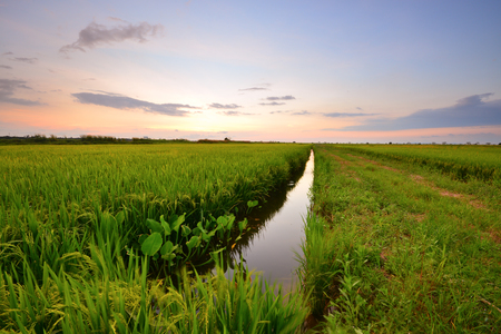 Beautiful morning scenery over the green paddy field. Stock fotó