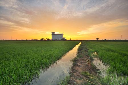 Beautiful sunrise over the green field. Stock fotó