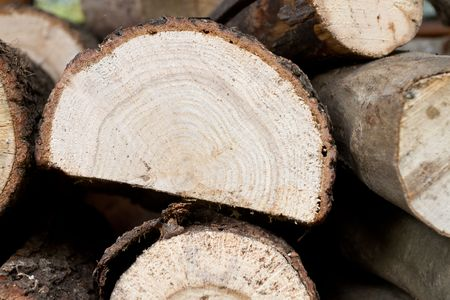Stacked timber logs Stock Photo - 8092290