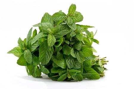 Fresh mint leaves  Stock Photo - 8578271