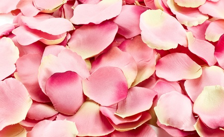 Background of pink rose petals photo
