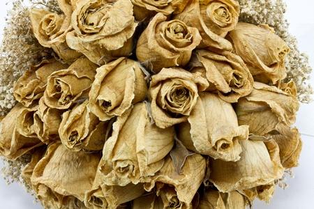 dode bladeren: Boeket gedroogde roses geïsoleerd op witte achtergrond Stockfoto