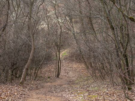 This is Brno forest. Stockfoto