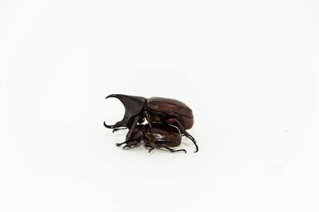 abound: Beetles isolated in white