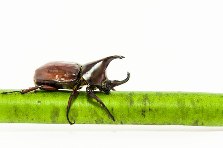 abound: Beetle on tree