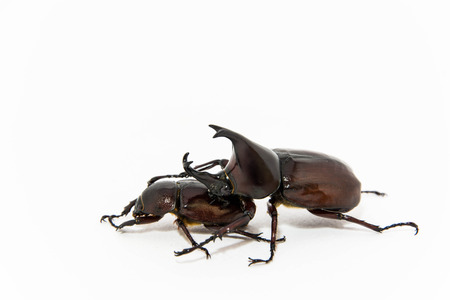Beetles isolated in white