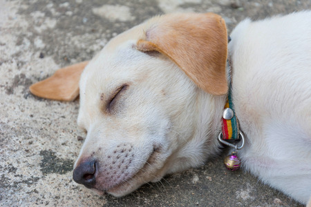 dogie: friendly puppy dog sleeping on the ground