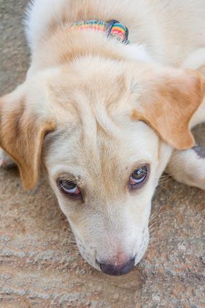 sitting on the ground: friendly puppy dog sitting on the ground and squinting at the camera
