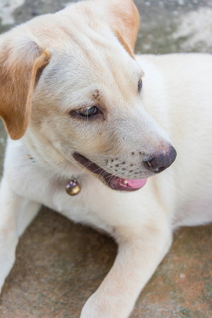 smilling: friendly puppy dog sitting on the ground and smilling Stock Photo