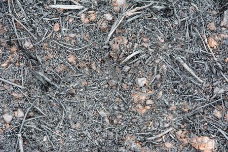 burnt: after burnt rubber tree burnt debris