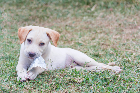 dogie: friendly puppy playing with toy on ground