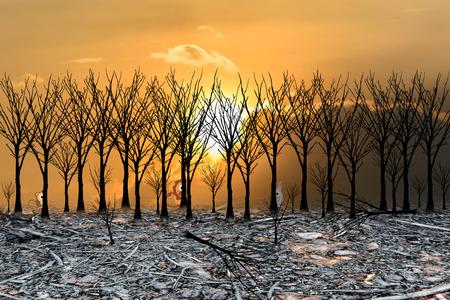 forest fire: de incendios forestales con el fondo de la puesta del sol