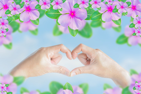 silhouette coeur: heart shape of hand on lily background Banque d'images