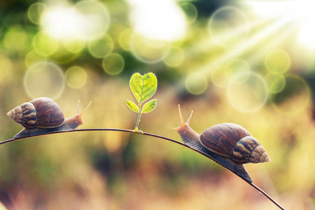 vintage style photo of snail walking on leaf with lighting effect