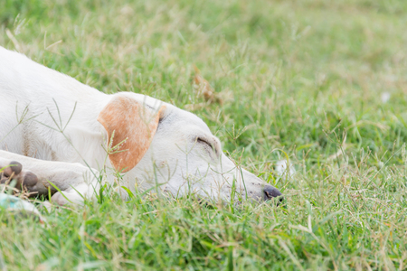 wounded: wounded dog sleeping on green grass in bad weather