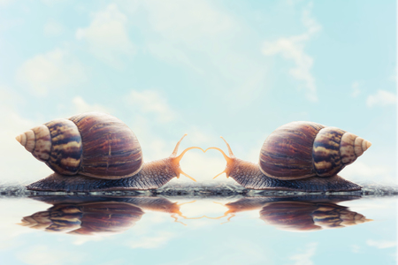 snail meet and in love each other with sky background