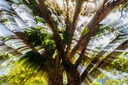 Abstract motion blur of tree with light and mountain background