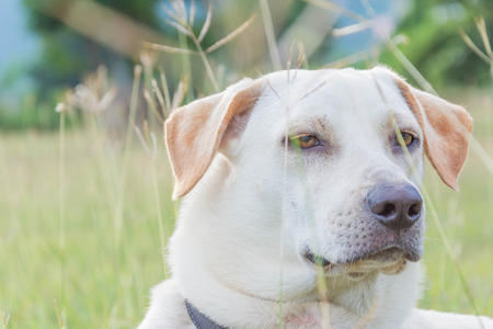 dogie: friendly puppy dog sitting on the Meadow Stock Photo