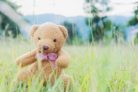 sitting on the ground: Teddy bear sitting on green grass ground Stock Photo