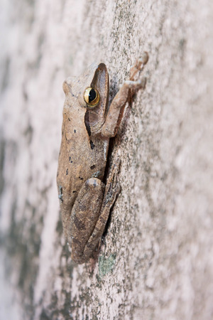 eyeing: frog on concrete wall Stock Photo