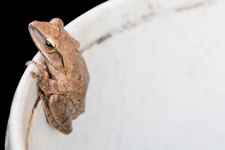 eyeing: frog on plastic tank Stock Photo