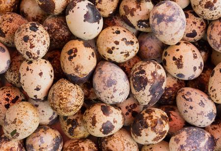 codorniz: huevos de codorniz fondo Foto de archivo