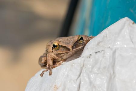escalate: frog on plastic bag