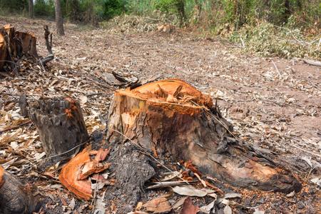 debris: after burnt rubber tree burnt debris