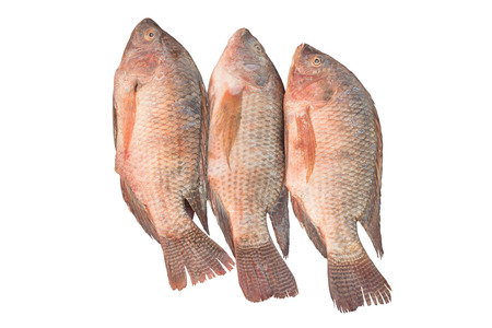 big fin: Red tilapia fish isolated on white background