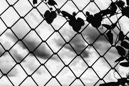 chained link fence: silhouette of chain fence against blurry sunset background in white tone