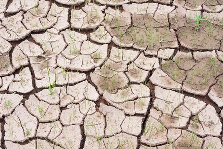 waterless: waterless cracked soil background