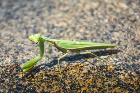 grasshopper on rock in nation park